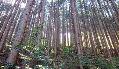 5 Feb 2017 | Japanese worker shortage leads to more forestry colleges