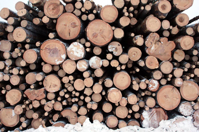 9 Mar 2017 | Global timber and wood products market update