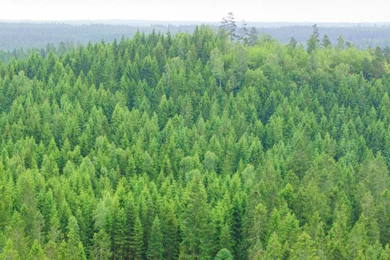 Södra to offer renewable electricity through Guarantees of Origin to Europe