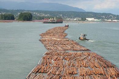 Sawmill profit margins fall