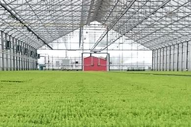 Sweden: 400 million seedlings annually