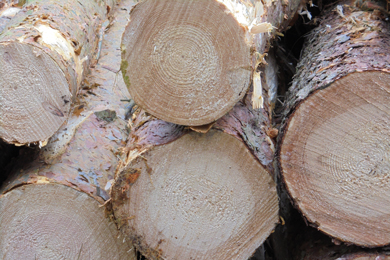 German Log Exports To China Soar