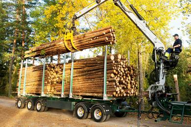 Holmen introduces digital wood scanning