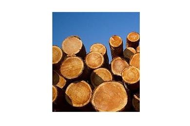 Europe expanding presence in Chinese log market