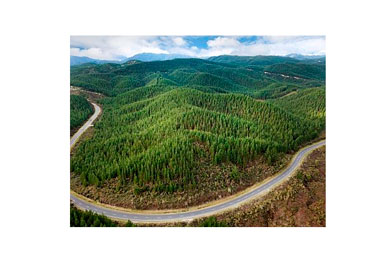 NZ$100m forestry package announced