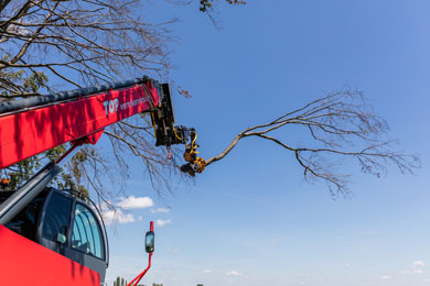 New: Grapple saw with Total Tree Control