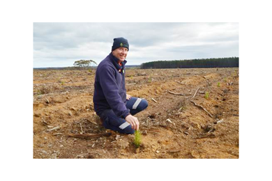 Seedlings signal new era for KI forestry