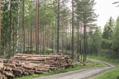 Metsä Group introduces a new pricing method with thinnings